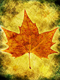 Autumn maple leaf. On grunge texture background Stock Images