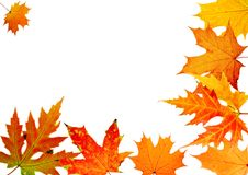 Autumn maple-leaf Stock Images