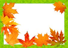 Autumn maple-leaf Royalty Free Stock Image