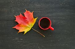 Autumn Maple Leaf And Cup Of Tea Royalty Free Stock Photography
