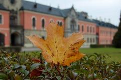 Autumn Maple Leaf Royalty Free Stock Photo
