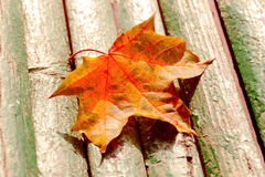 Autumn maple leaf on bench Stock Photo