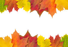 Autumn maple leaf border. Colorful autumn maple leaf border isolated on white background with copy space Royalty Free Stock Images