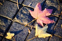 Autumn maple leaf on the cobble stone Stock Images