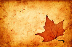 Autumn maple leaf on grunge old paper Royalty Free Stock Images