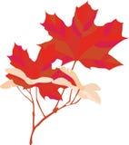 Autumn Maple Leaf Royalty Free Stock Image