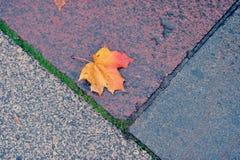 Autumn maple leaf lying on the wet granite. Single lash on the sidewalk Royalty Free Stock Photos