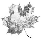 Autumn maple leaf. Mixed with trees and sky, double exposure photo Stock Photo