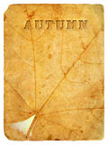 Autumn maple leaf. Old postcard. Stock Photo