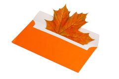 Autumn maple leaf in orange envelope Royalty Free Stock Image