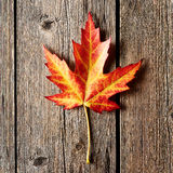 Autumn maple leaf over wooden background Stock Photos