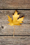 Autumn maple leaf over wooden background Royalty Free Stock Image