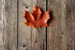 Autumn maple leaf over wooden background Royalty Free Stock Photo