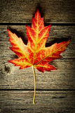 Autumn maple leaf over wooden background Stock Image
