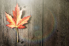 Autumn maple leaf over wooden background Stock Images
