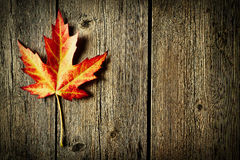 Autumn maple leaf over wooden background Royalty Free Stock Photos