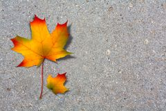 Autumn maple leaf on paved road Royalty Free Stock Photo