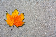 Autumn maple leaf on paved road Royalty Free Stock Image
