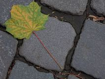 Autumn maple leaf on a pavement. In the city Royalty Free Stock Photography