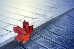 Autumn, maple leaf in rain. On road stock image