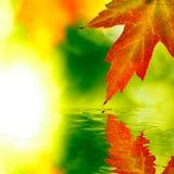 Autumn Maple Leaf Reflection stock image