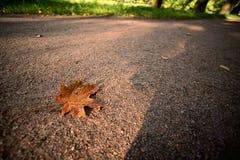 Autumn maple leaf on the road Stock Photos
