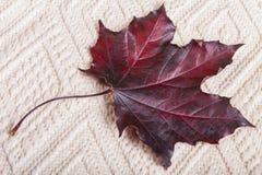 Autumn Maple Leaf rosso Fotografia Stock Libera da Diritti