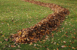 Autumn maple leaf in a row on green grass Stock Photography