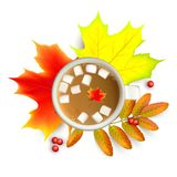 Autumn maple leaf and rowan branches with ashberry and cup of coffee with marshmallow isolated on a white background. Banner with maple autumn leaves and rowan Stock Image