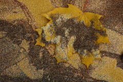 Autumn maple leaf with shine Royalty Free Stock Photography