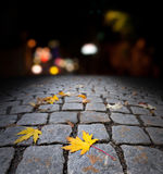 Autumn maple leaf on street at night Royalty Free Stock Photo