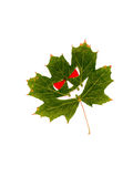 Autumn maple leaf in the style of Halloween - an evil face with red eyes. Royalty Free Stock Images