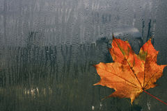 Autumn maple leaf on wet window Stock Photo