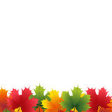 Autumn maple leaf on a white background Stock Photography