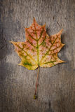 Autumn maple leaf on wood surface Stock Image