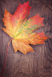 Autumn  maple leaf on wooden background Royalty Free Stock Photo