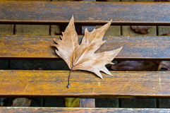 Autumn maple leaf on the wooden bench Stock Photos