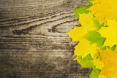 Autumn maple leaf on wooden board Royalty Free Stock Photo