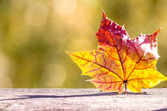 Autumn maple leaf on a wooden table Stock Images