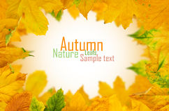 Autumn Maple Leafs Stock Photography