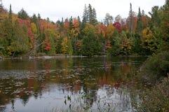 Autumn maple leafs Stock Photo