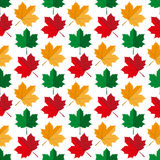 Autumn maple leafs pattern Stock Photos