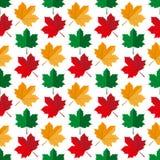 Autumn maple leafs pattern Stock Photos