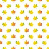 Autumn maple leafs pattern. Royalty Free Stock Photo