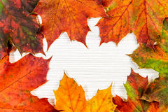 Autumn maple leafs on white background Royalty Free Stock Photography