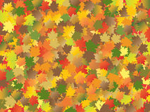Autumn maple leave Stock Images