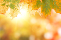 Autumn maple leave background with boked Royalty Free Stock Photography