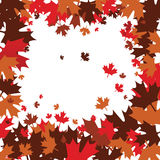 Autumn Maple Leaves. Vector background of autumn maple leaves Royalty Free Stock Photos