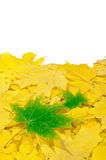 Autumn maple leaves. Yellow and green leaves Royalty Free Illustration