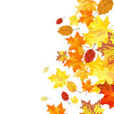 Autumn maple leaves stock illustration